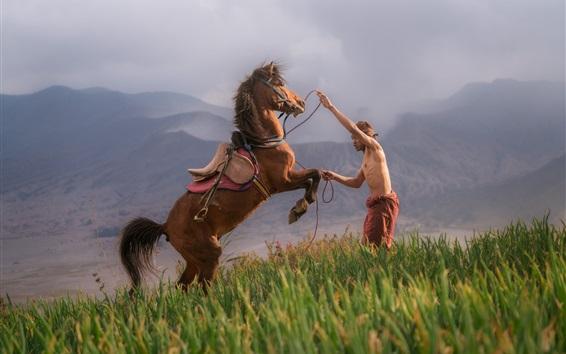 Обои Лошадь и мужчина, поле