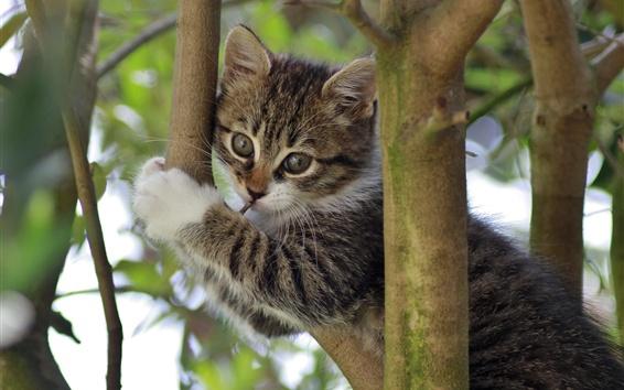 Wallpaper Kitty in tree