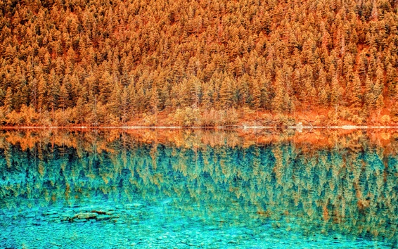Wallpaper Lake, blue water, trees, forest, reflection