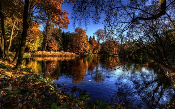 Wallpaper Lake, trees, autumn, birds