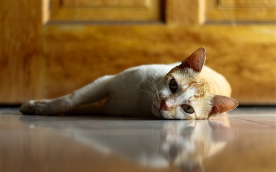 Wallpaper Lazy cat, rest