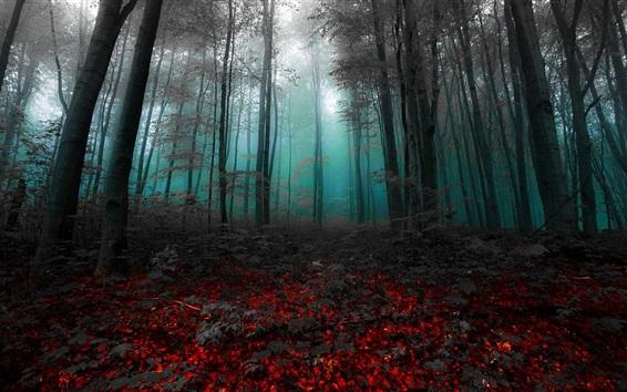 Wallpaper Morning, forest, trees, mist