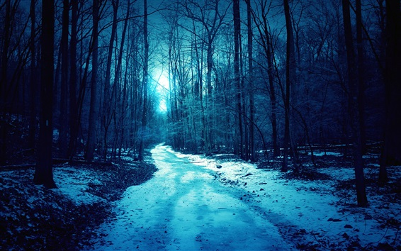 Wallpaper Night, forest, trees, light, path, snow