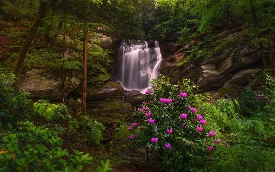 Обои Северная Каролина, природа, водопад, рододендроны, деревья