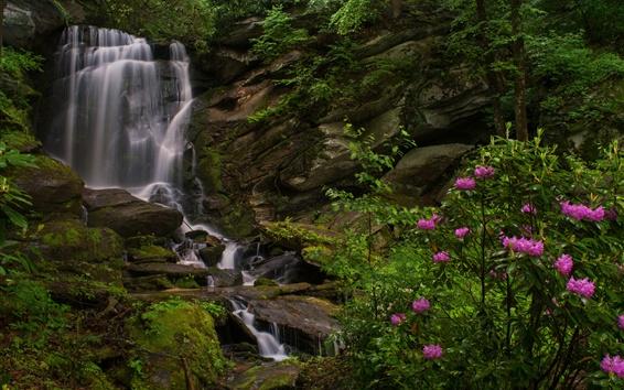 Обои Северная Каролина, водопад, рододендроны, скалы