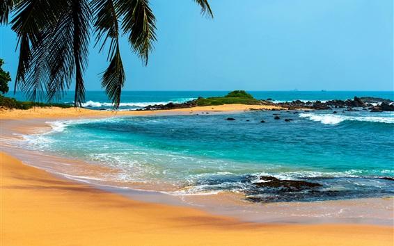 Papéis de Parede Palmeiras, mar, pedras, praia