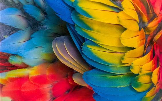 Papéis de Parede Parrot colorful pls close-up
