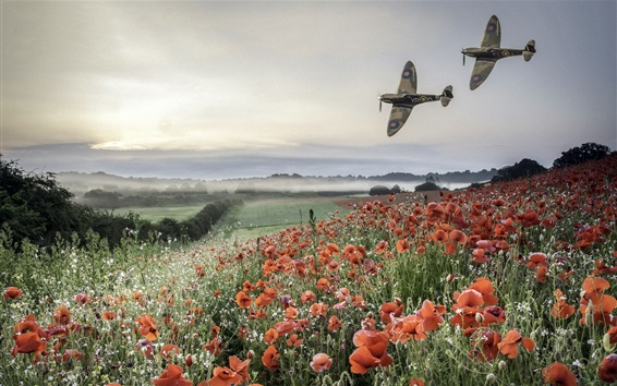 Wallpaper Planes, poppies field, mountains, fog