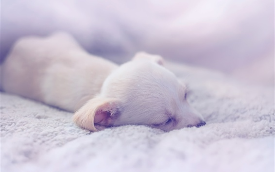 Wallpaper Puppy sleeping, comfort house