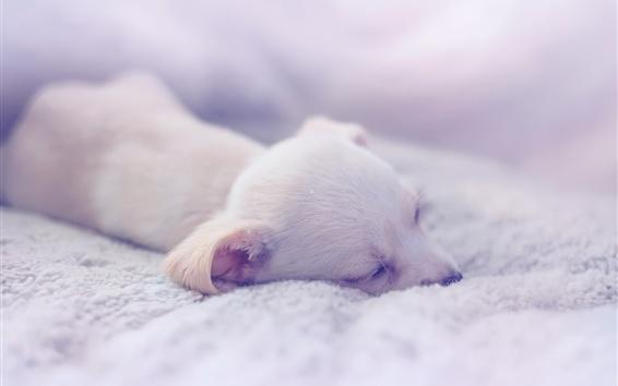 배경 화면 강아지, 자고 집