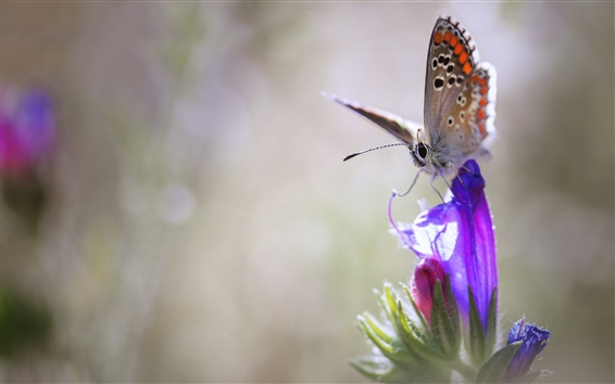 Обои Фиолетовый цветок, бабочка, боке