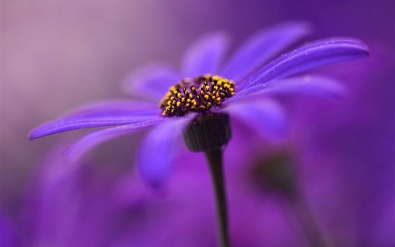 壁紙 紫の花、花弁、茎