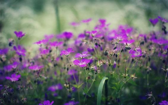 Papéis de Parede Pequenas flores roxas, primavera