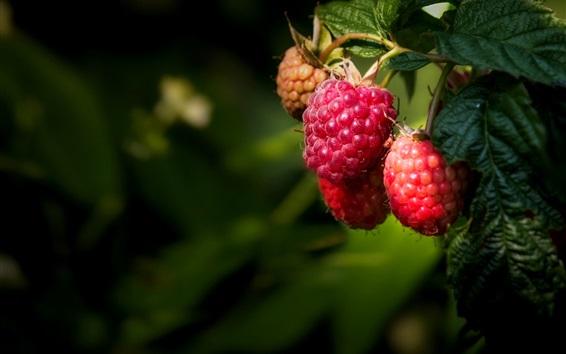 Wallpaper Ripe berries, raspberry, leaves