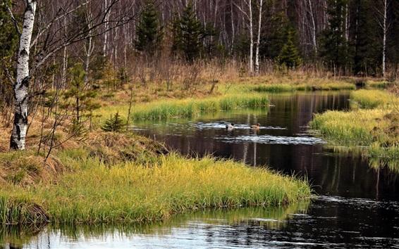 桌布 河,草,鴨,樹