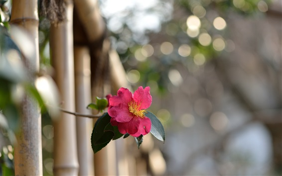 Wallpaper Rose out of fence, bokeh