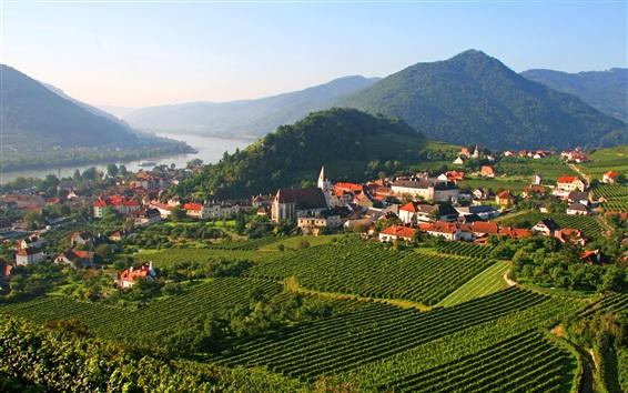 Обои Шпиц, Австрия, плантация, поле, горы, деревья, река, дома