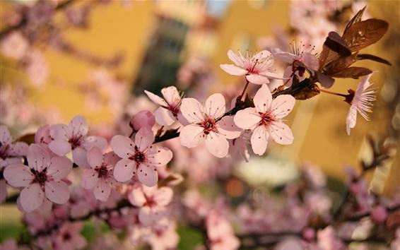 Wallpaper Spring, plum flowers bloom, twigs
