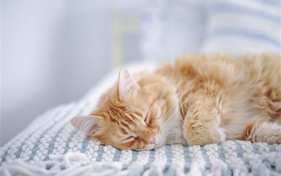 Обои Пушистый котенок заснул