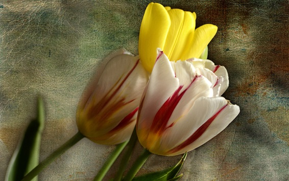 Wallpaper Three tulips flowers, cloth background