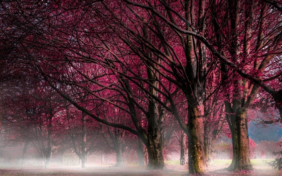 Обои Деревья, красные цветы, утро, туман