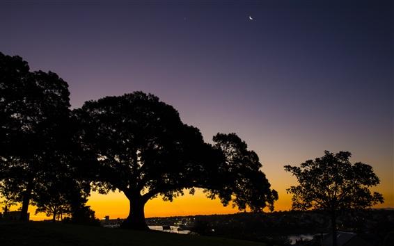 Wallpaper Trees, sunset, evening, river, docker