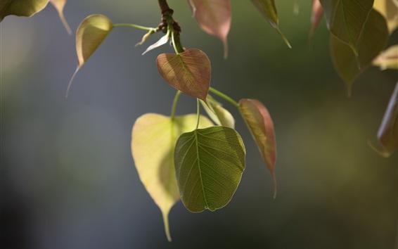 Fond d'écran Branches, feuilles, bokeh, printemps
