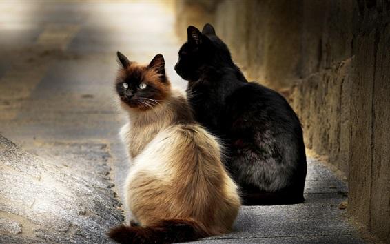 Обои Две кошки сидят на улице