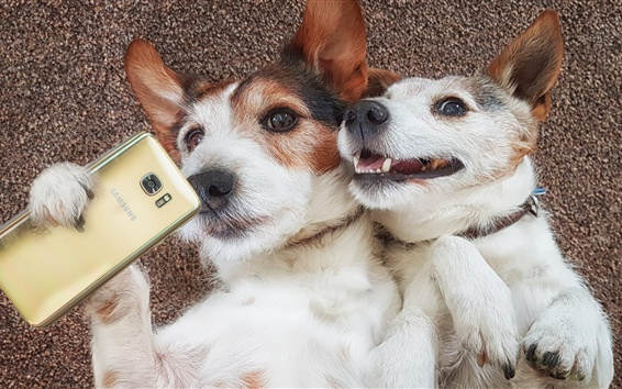 Wallpaper Two dogs, funny, use phone