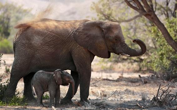 Fond d'écran Deux éléphants, famille