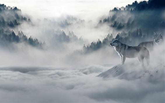Wallpaper Two wolves, forest, fog