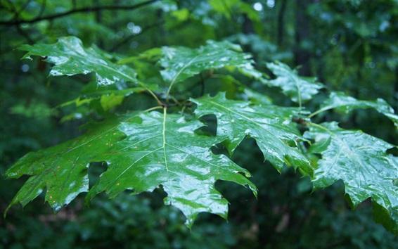 배경 화면 젖은 녹색 잎