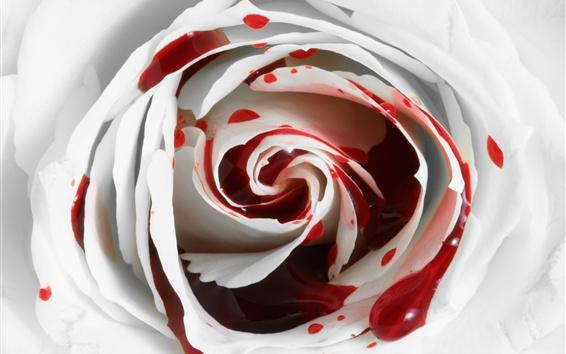 Wallpaper White petals rose flower, bleeding