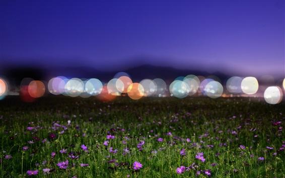 Обои Полевые цветы, ночь, блики