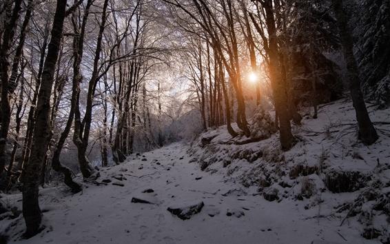Обои Зима, снег, горы, деревья, солнечные лучи, Болгария