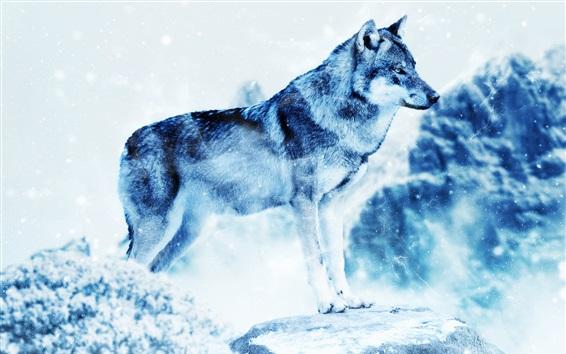 Wallpaper Winter wolf, predator, snowing