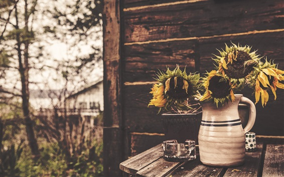 Wallpaper Withered sunflowers, vase