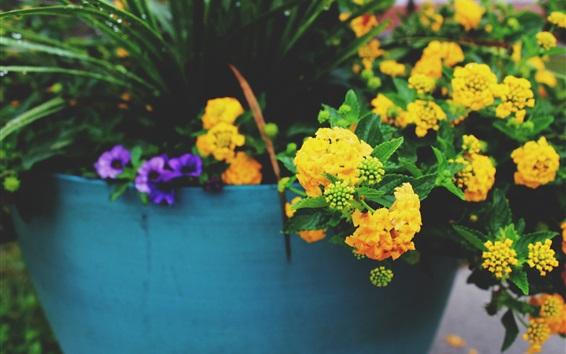 Wallpaper Yellow flowers, houseplant