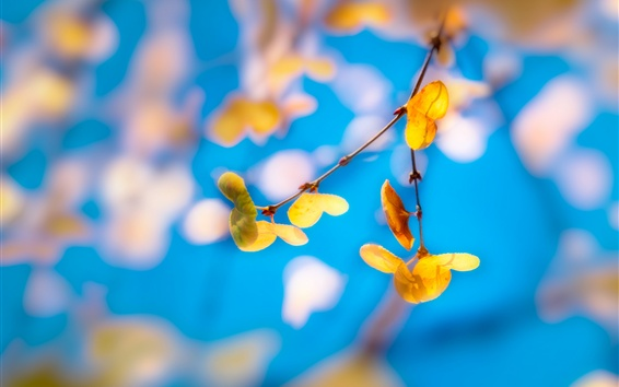 Papéis de Parede Folhas amarelas, galhos, fundo azul, borrão