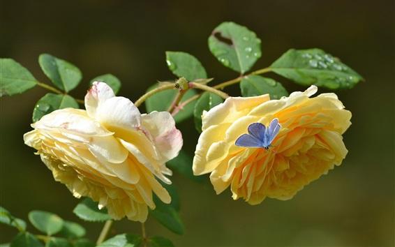 Papéis de Parede Pétalas amarelas rosas, borboleta azul