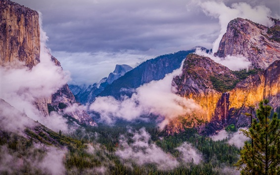 Wallpaper Yosemite National Park, mountains, forest, clouds, fog, USA