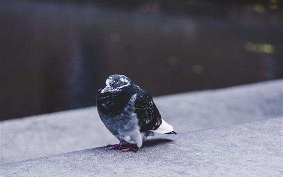 배경 화면 지상에 서있는 비둘기