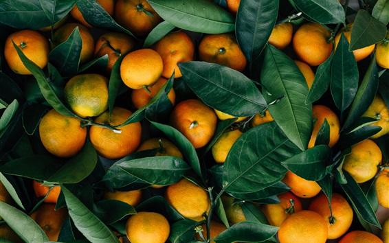 Обои Осенние фруктовые цитрусовые