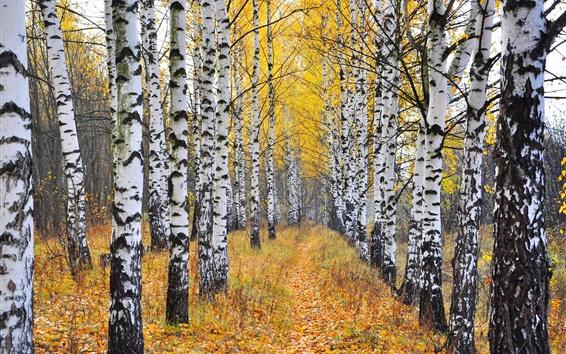 Wallpaper Birch forest, trees, grass, autumn