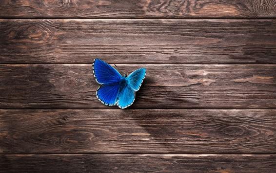 Fond d'écran Papillon bleu, fond de planche de bois