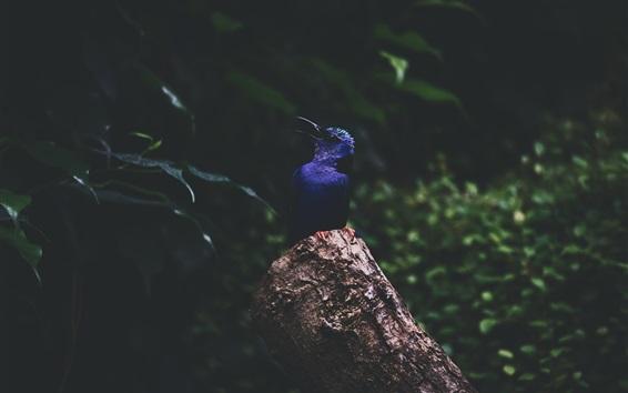 Fondos de pantalla Martín pescador azul de la pluma, tocón
