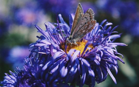Papéis de Parede Flores de pétalas azuis, borboleta