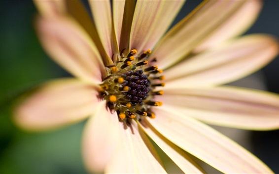 Papéis de Parede Flor brilhante, pétalas, pólen