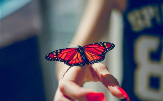 Wallpaper Butterfly, insect, hands