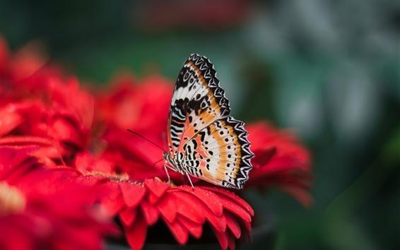 壁纸 蝴蝶,红花,花瓣,水滴
